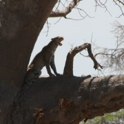 Viajes a Kenia