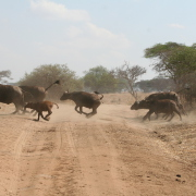 Kenia y Zanzibar