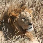 Viajes de safari en Kenia