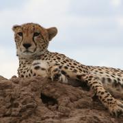 Viajes Masai Mara