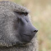 Safaris en Masai Mara