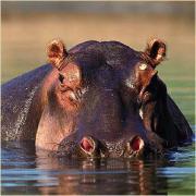 Viajar a Botswana