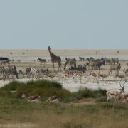 Viaje a Namibia 3