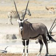 Viaje a Namibia 4