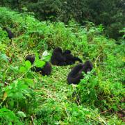 Viajes a Uganda