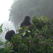 Viajes a Rwanda