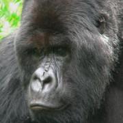 Gorila Trek