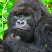 Viajes Uganda y Rwanda