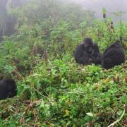 safaris Rwanda