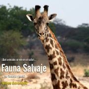 safaris en tanzania y kenia